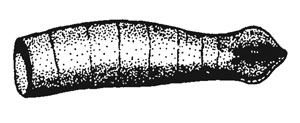 Coleophora vermiculatella: case
